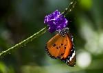 Бабочковый парк в Канаде