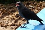 птица, клюв, фото