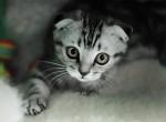 Международная выставка котов
