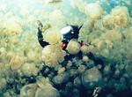 Одно из уникальнейших мест на планете – Озеро медуз