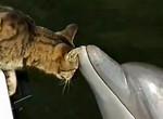 Это любовь или почему всем всегда хочется погладить кота