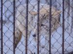 Помочь харьковским животным просто – сходить в зоопарк