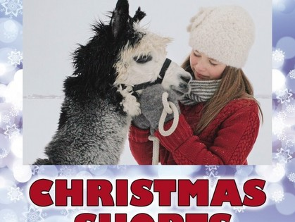 """CHRISTMAS SHORTS показывают в """"Боммере"""""""