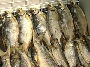 В Харьковской области шесть предпринимателей торговали сомнительной рыбой