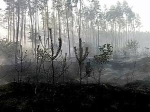 Пожары Харьковщины: в Балаклее сгорел хвойный лес, под Изюмом — хозпостройки (ФОТО)