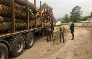 СБУ блокировала масштабные хищения древесины на Харьковщине (ФОТО)