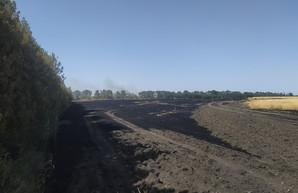 Под Харьковом сгорело еще одно фермерское поле пшеницы (ФОТО)