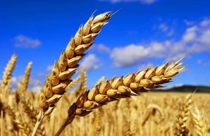 В Украине прогнозируют самый большой урожай за всю историю
