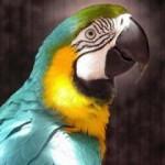 По городу разгуливает попугай-матерщинник