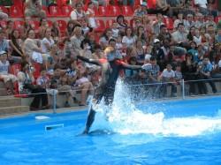 Танцы на воде. Дельфины поговорили с невестами по душам