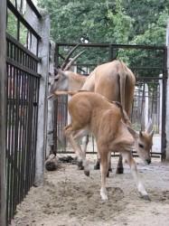 Харьковский Зоопарк отметил 115 лет