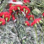 Областные и городские власти возложили цветы на могилы Кушнарева и Масельского