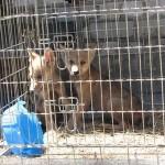 В Харьковском зоопарке появились канадские волчата