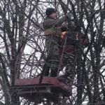 Новый год: в Харькове обматывают деревья проводами