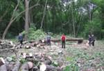 В Лесопарке массово вырубают аварийные деревья. За сутки – просека в полкилометра