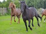 лошадь,конь,театр
