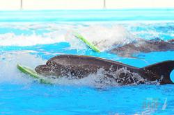 В харьковском дельфинарии показали шоу-программу «Дари любовь»