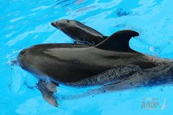 В харьковском дельфинарии появилась малышка-дельфин