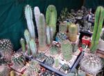 В Харькове открылась выставка цветов