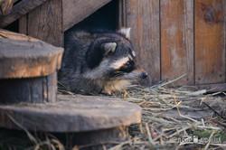 Харьковский зоопарк нуждается в помощи