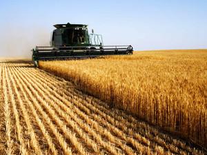 Райнин боится, что аграрии восстанут против ликвидации коррупции на селе