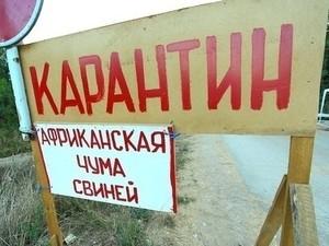 Под Харьковом зафиксирован еще один очаг африканской чумы свиней