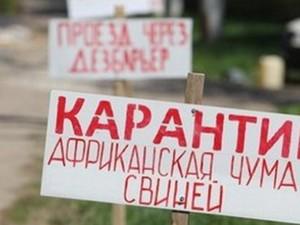 Владельцы свиней, уничтоженных из-за АЧС, получили компенсацию – ХОГА