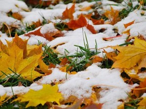 Харьковчан предупреждают о грядущем снегопаде