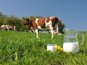 Харьковское молоко скоро будет котироваться в Европе