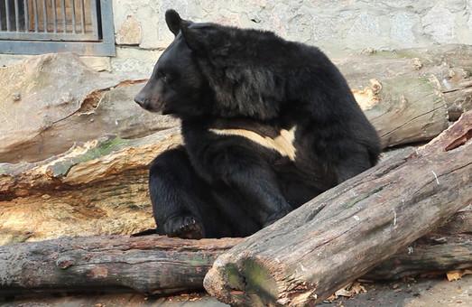 Медведи в харьковском зоопарке готовятся к зиме (ФОТО, ВИДЕО)