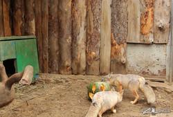Праздник тыквы в Харьковском зоопарке (ФОТО, ВИДЕО)