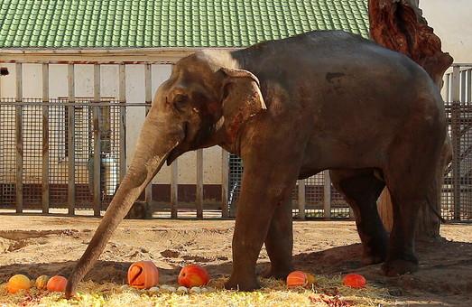 Харьковский слон Аун празднует день рождения (ФОТО, ВИДЕО)