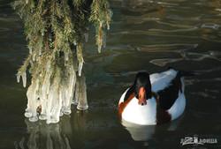 Зима в Харьковском зоопарке (ФОТО)
