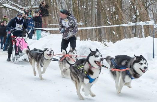 Под Харьковом пройдут гонки ездовых собак