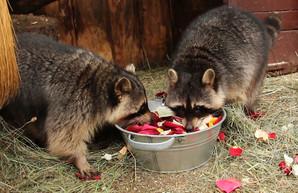 День влюбленных в харьковском зоопарке