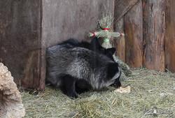 Масленица в Харьковском зоопарке (ФОТО, ВИДЕО)