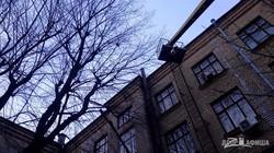В Харькове спасли кота, просидевшего три дня на дереве возле Института монокристаллов (ФОТО)