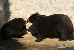 Весна в Харьковском зоопарке: Пробуждение медведей (ФОТО, ВИДЕО)