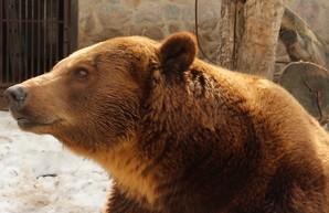 Весна в Харьковском зоопарке: Пробуждение медведей