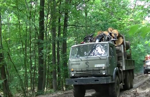 На харьковском лесе в этом году барыги «распилили» уже 1 миллиард гривен – СМИ