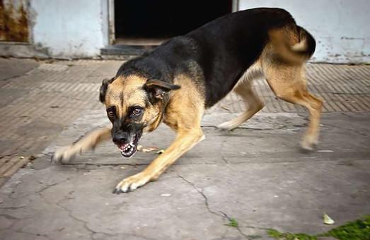 На Харьковщине фиксируют бешенство у собак, кошек и лис