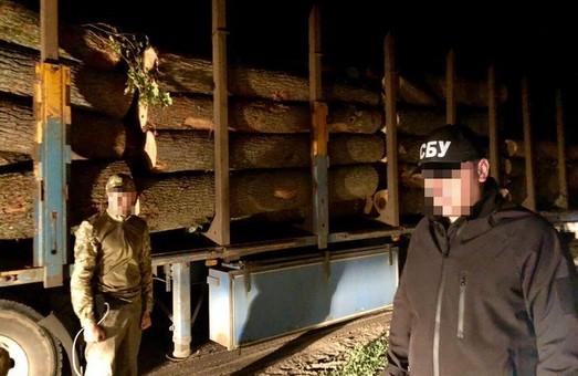 На Харьковщине райсуд отказался арестовать имущество «черных лесорубов»