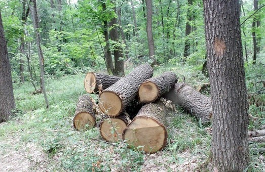 Директора харьковского лесхоза, разоблачившего «черных лесорубов», собираются уволить - СМИ