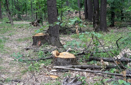 Мы посадим не только новые деревья – Чагаровский