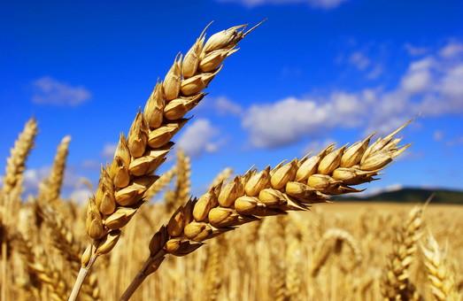 Под Харьковом у фермера отобрали урожай