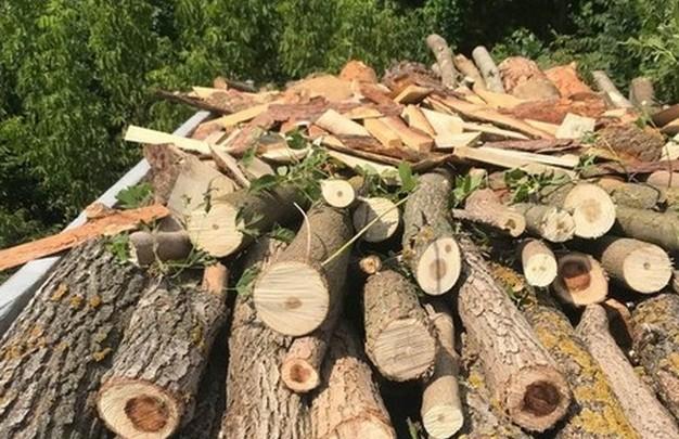 ГБР начало расследование незаконной вырубки леса на Харьковщине
