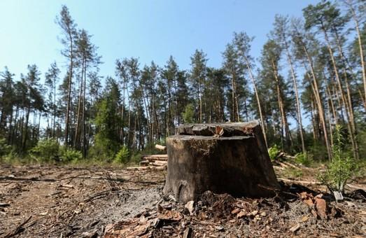 Дело «черных лесорубов» на Харьковщине: стоимость похищенного леса оказалась больше в 2,5 раза