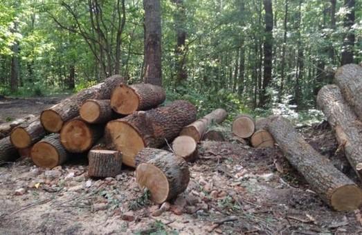 Дело «черных лесорубов»: НАБУ проводит обыск в доме руководителя лесхоза
