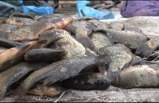 Рыбоохранный патруль разогнал продавцов, торгующих нелегальной рыбой (ВИДЕО)