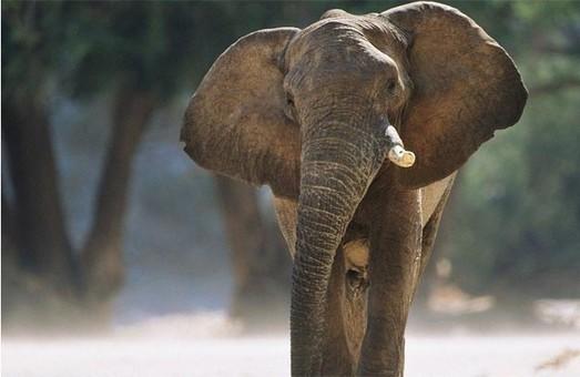 По улицам Харькова разгуливал слон и агрессивная лиса (ФОТО, ВИДЕО)